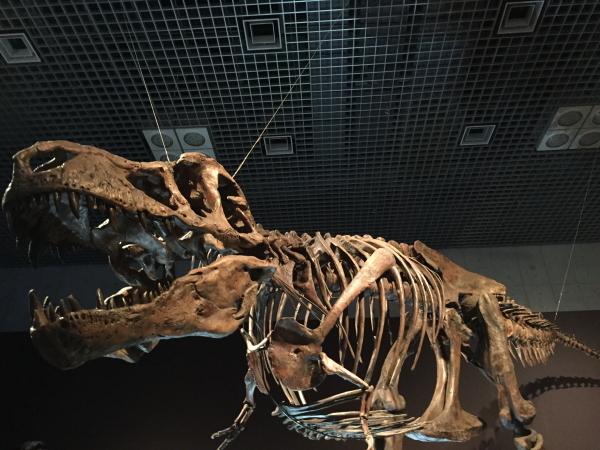 the-dinosaur-expo-2016-2.jpg