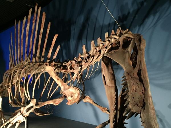 the-dinosaur-expo-2016-3.jpg